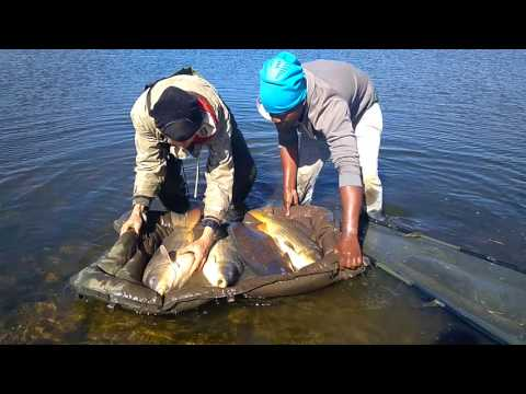 Rietvlei Carp Fishing