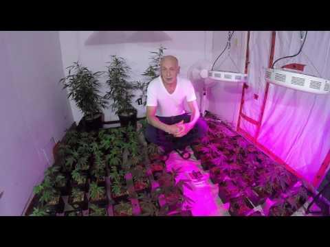 Indoor Cultivation/Lighting.