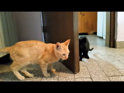 Kittens Playing Behind The Door