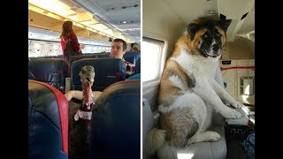 Animals flying on planes  Flights That Had The Best Passengers