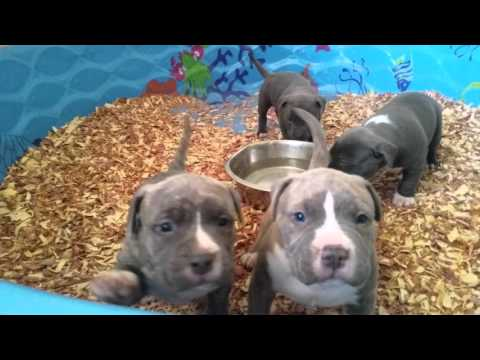 Extreme puppy fight over water