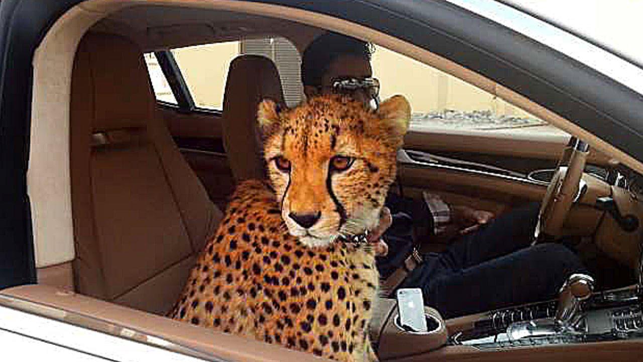 7 Безумных Вещей, Которые Можно Увидеть Только в Дубае