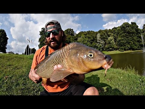 Carp Fishing In Small Ponds (Light Tackle)