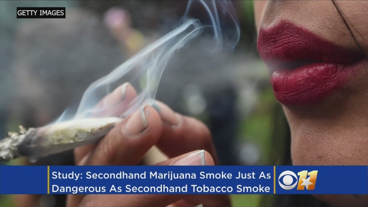 Is Secondhand Marijuana Smoke Dangerous? Biologist Says Yes