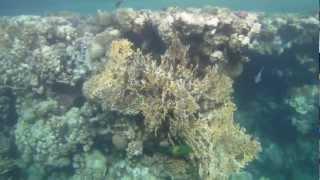 Schnorcheln im Roten Meer - Teil 3