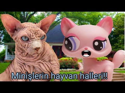 Minişlerin Hayvan Halleri!!! -3