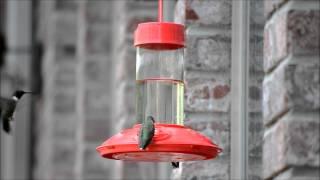 Dr. Jb's 16 Oz Hummingbird Feeder All Red W/se077 Hanger