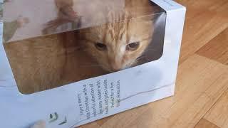 Cat Bazza the box