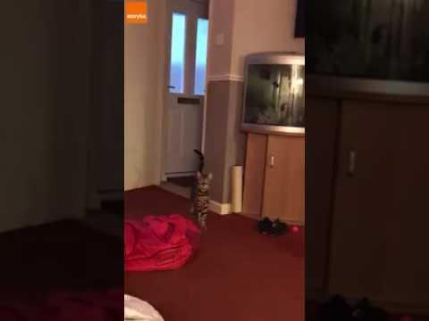Cat sings song
