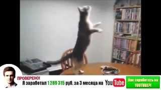 Самые смешные кошки 2014 #2