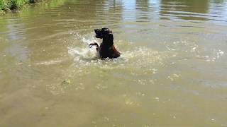 Funny Dog Fail: Dog trying to swim