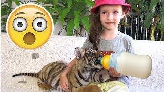 Ulya at Tiger Farm Funny KIDS vs ZOO ANIMALS