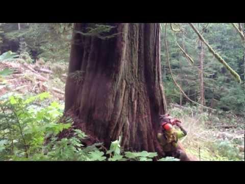 Lucky Logger Red Cedar