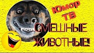 ЮМОР ТВ | Смешные видео про животных/Смешные животные!