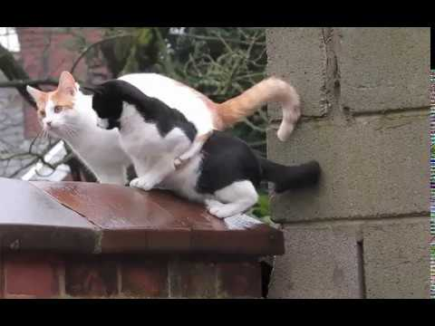 Cats jumping around in synch