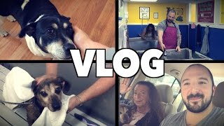 My Dogs Have Fleas! (vlog Feat. My Mom)