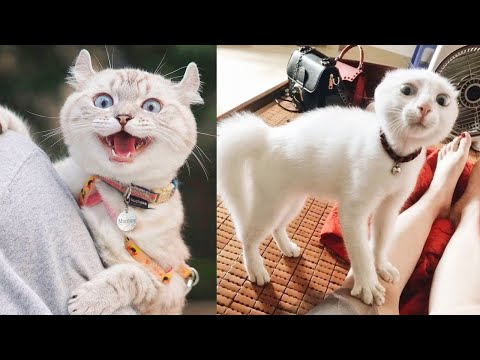 Try Not To Laugh While Watching Funny Animals Video Compilation #58