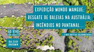 Expedição Mundo Mangue; Baleias resgatadas e mais notícias socioambientais - VERDE MAR #71