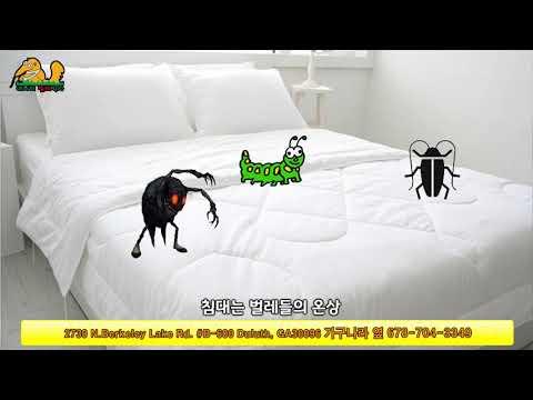 침대에서 무는 빈대 Bed Bug 없애기