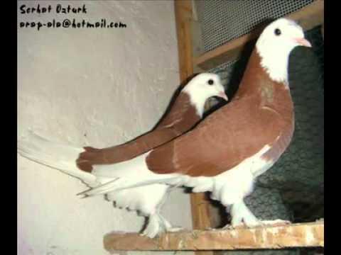 فيديو لصور حمام لسة جاية من تركيا طازة