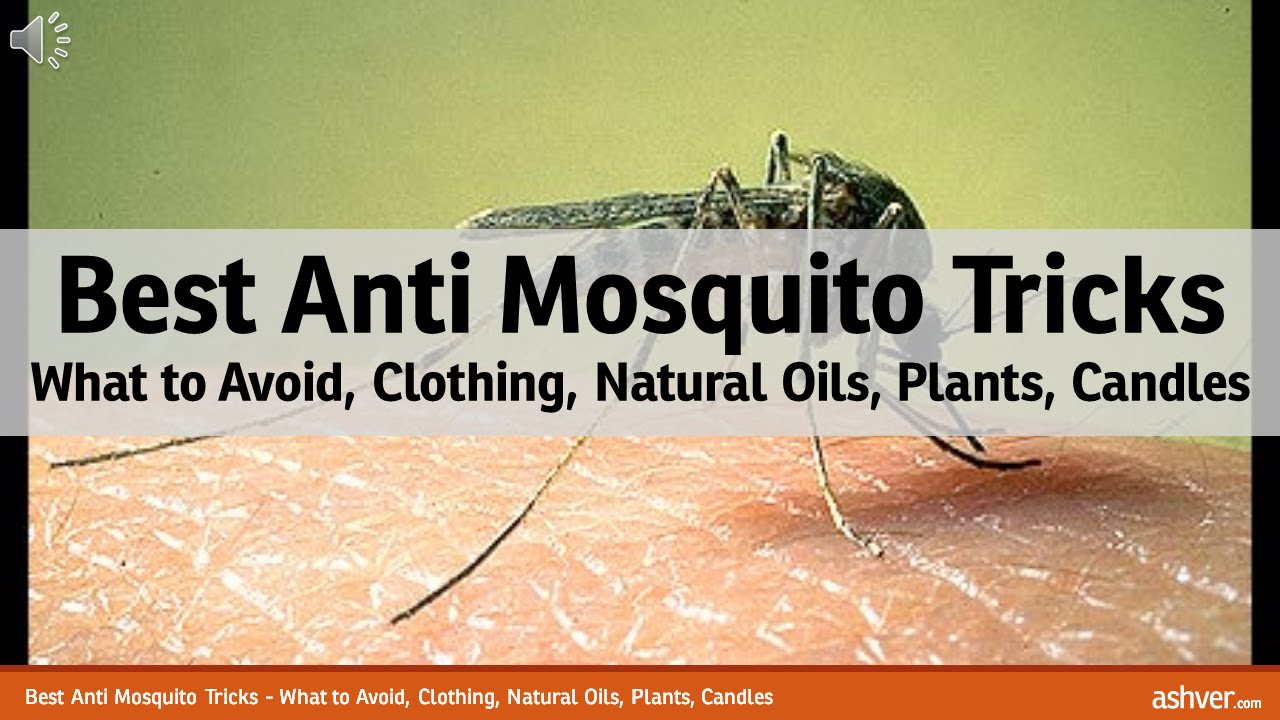 Best Anti Mosquito Tricks - What to Avoid, Clothing, Natural Oils ...