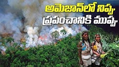 Amazon Rainforest Is Burning At An Unprecedented Rate | #AmazonRainForest Latest News | ABN Telugu