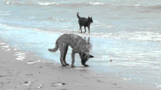 Aloha Dogs auf der Insel Moen, DK