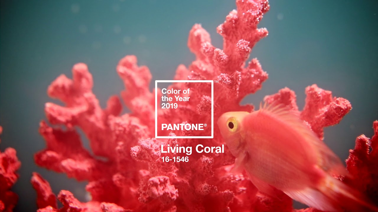 pantone color of the year 2019 living coral youtube. Black Bedroom Furniture Sets. Home Design Ideas