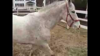 Gray horse arrives
