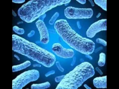 بكتيريا كرتون