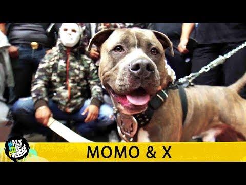 MOMO & X  HALT DIE FRESSE 408  HD VERSION AGGROTV