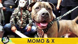 MOMO & X - HALT DIE FRESSE 408 (OFFICIAL HD VERSION AGGROTV)