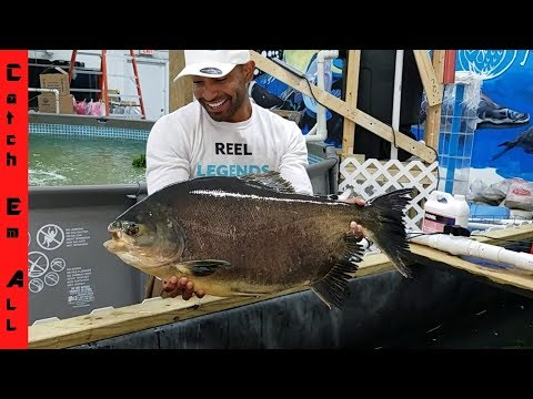 World's Biggest Piranha gets New Indoor Home!