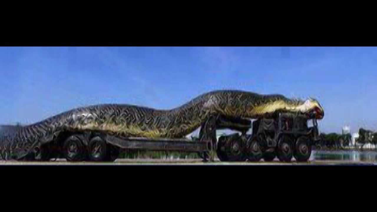 Anaconda Largest World Biggest Snake
