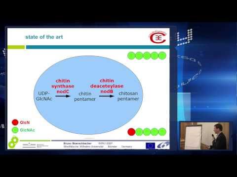 ChitoBioEngineering (part 1)