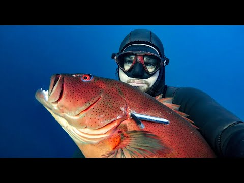 EVERY CORAL TROUT SPECIES IN THE WORLD - Spearfishing Fish In Focus