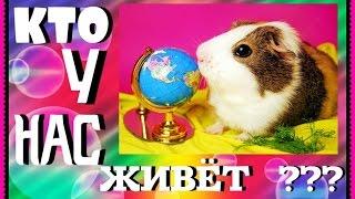 Кто у нас живёт?(Кто у нас живёт? В этом видео все наши домашние животные. Подписывайтесь на канал Хомки: https://goo.gl/yWNIYR Чтобы..., 2016-12-24T18:03:55.000Z)