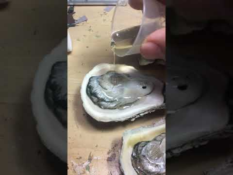 The oyster making of Es Chao Oyster Co.