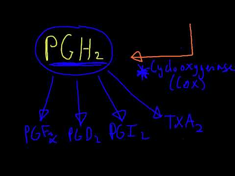 NSAID Pharmacology: Prostaglandin Synthesis