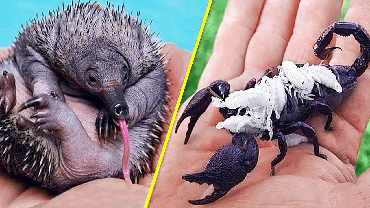 जन्म के समय अद्भुत दिखने वाले जानवर | Animals at birth