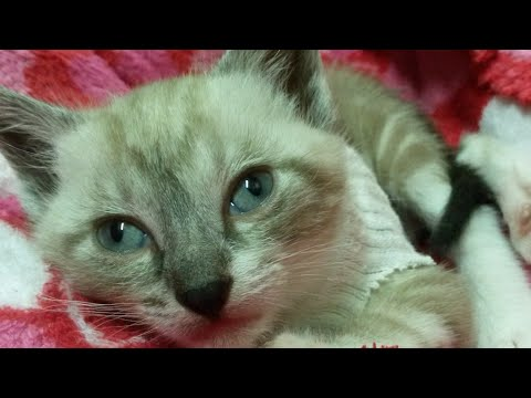 Baby kitten playing When I was young Toffy Memories part3