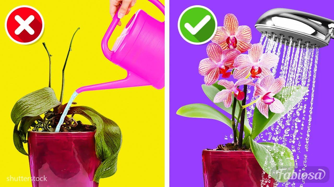 Download Cura delle orchidee indoor: 10 semplici regole per prendersi cura delle orchidee in casa