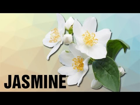 How To Pronounce Jasmine Pronunciation In Hindi Flowers Hd