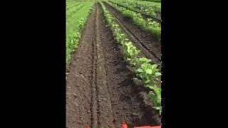 クボタトラクター丹波黒大豆 土寄せ作業