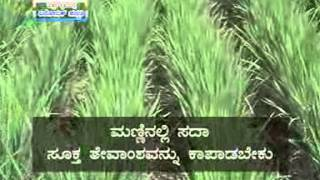 05 12 2013 aerobic method of paddy cultivation dr m p rajanna