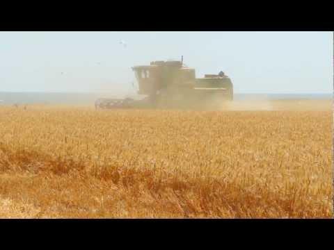 Зерновые культуры Запорожский юг Часть 2