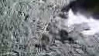 Кошка какает