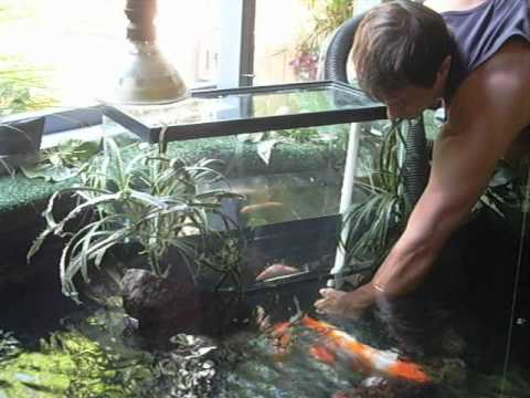 Upside Down Aquarium In Pond Youtube