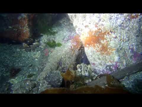 Point Hudson dive 09/16/2017