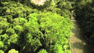 видео Чем полезен лес
